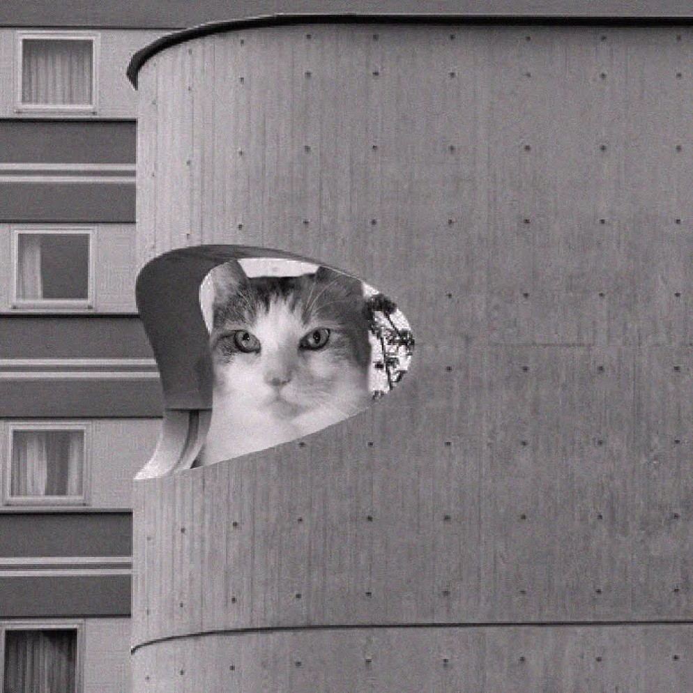 10 Cats_of_Brutalism