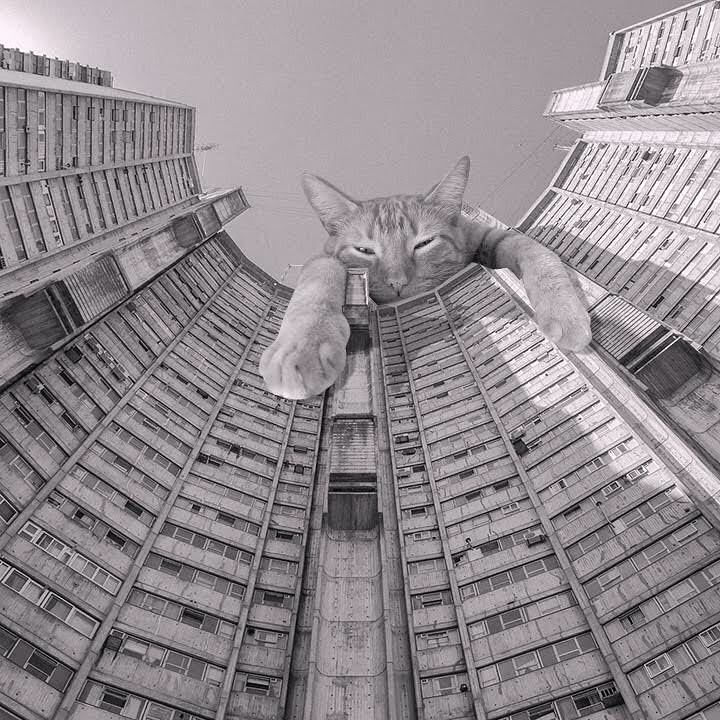 11 Cats_of_Brutalism