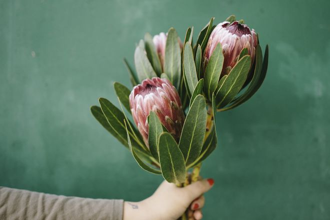 Il movimento nato negli Stati uniti che promuove un fiore etico e sostenibile è arrivato anche in Italia © Il baccello di vaniglia