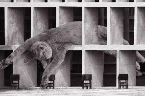Gatti e brutalismo: il profilo Instagram che fa impazzire gli architetti (e non solo)