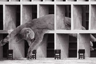 cats-of-brutalism-instagram-living-corriere