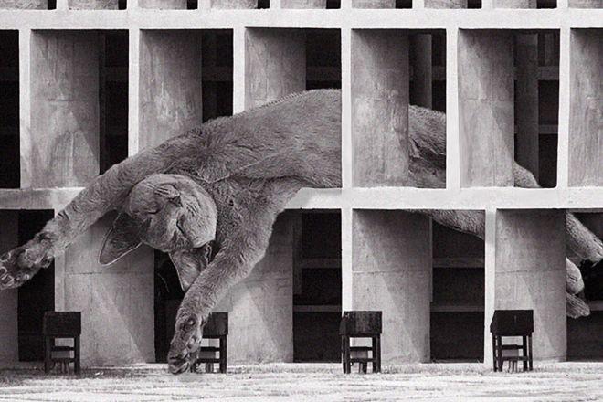 cats-of-brutalism-instagram-living-corriere