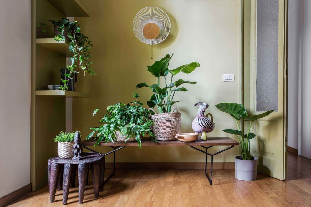 parete bianca piante