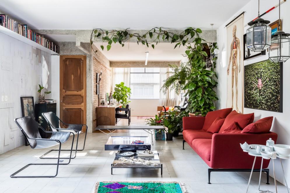 piante-alte-interno-poca-luce
