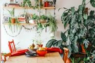 Il 62% dei Millennial interpellati in un recente sondaggio di Nelly Rodi ha ammesso che le piante sono state vitali per il proprio benessere nei mesi di isolamento © Brina Blum