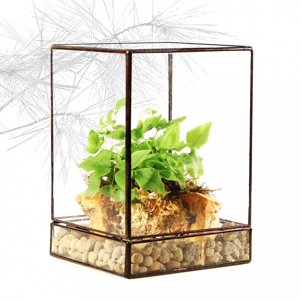 felce-da-interno-8 glass01studio.it-living-corriere