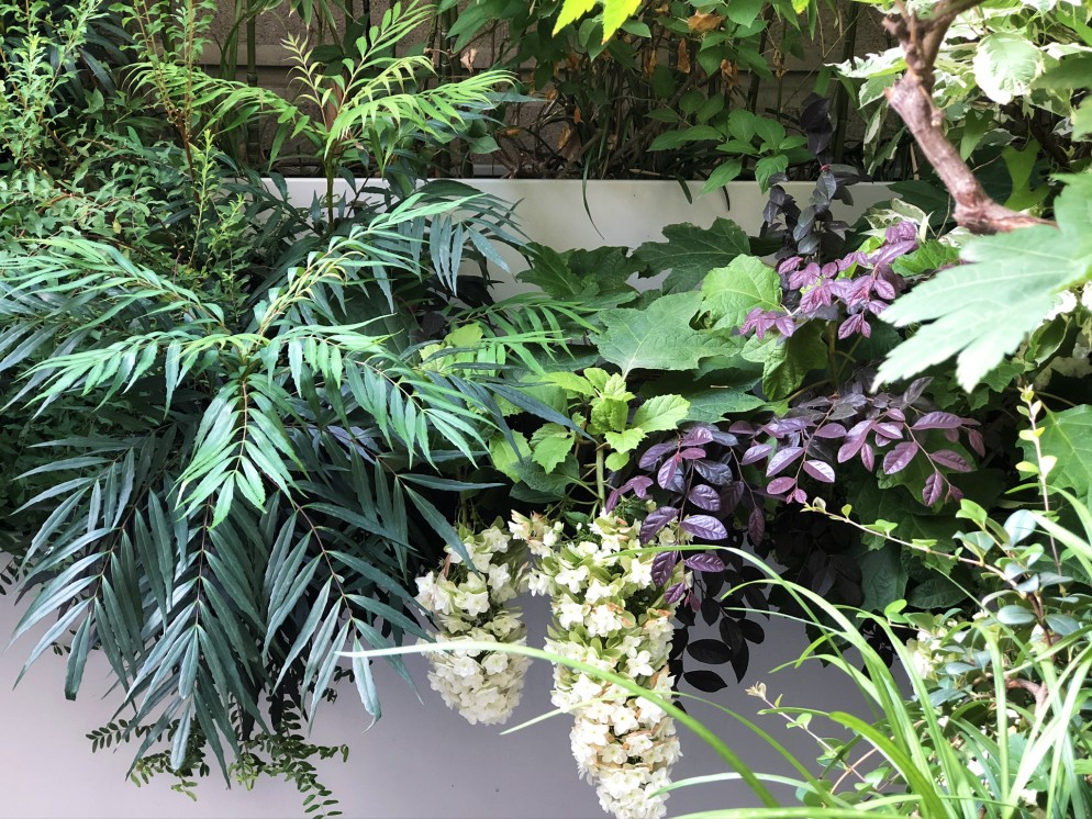 piante-sempreverdi-da-balcone-1. C Mazzucchelli-living-corriere