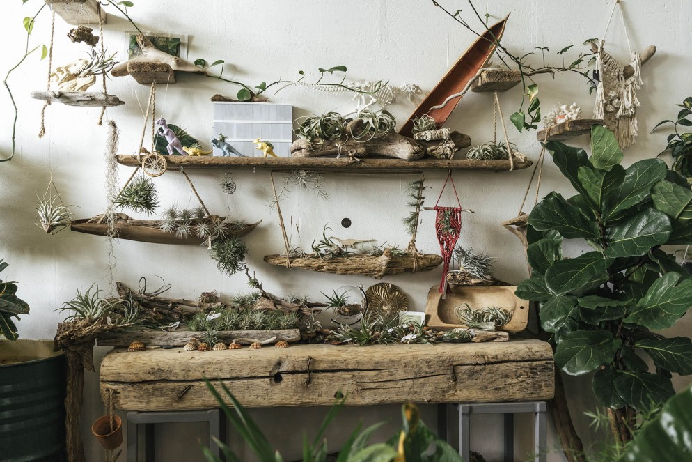 Assortment of plants and decoration in a showroom