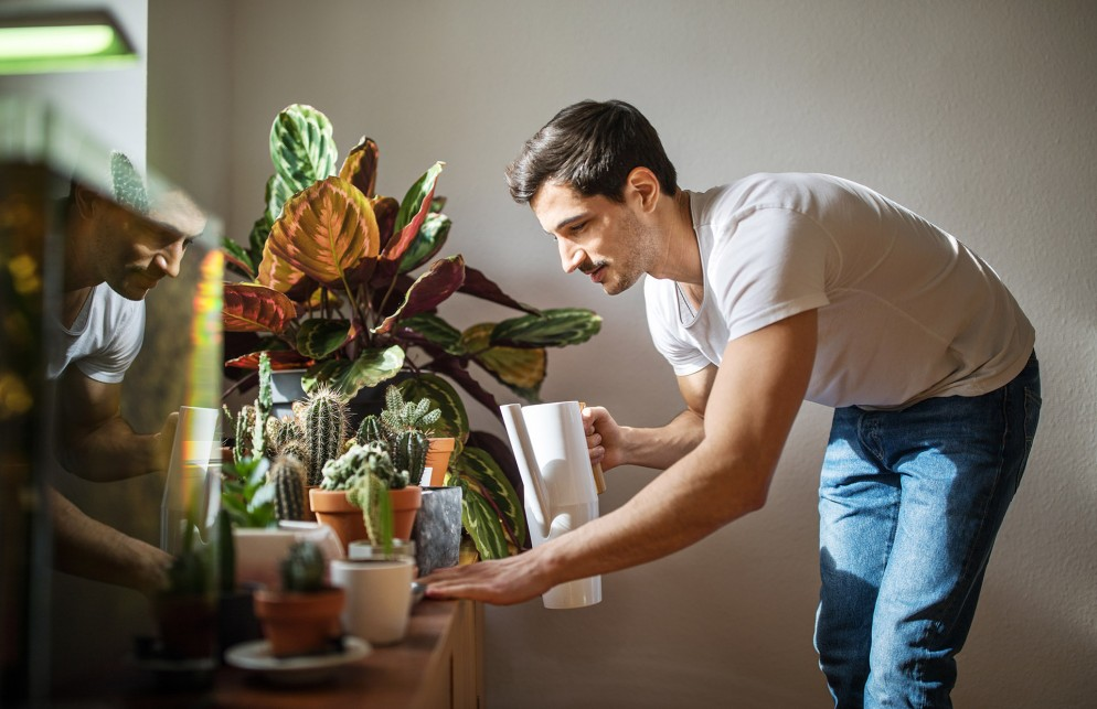 Man watering cacti plants in his living room