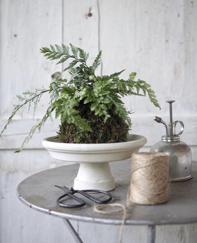 piante-eleganti-appartamento-11. felce in Kokedama @aboutgarden-living-corriere
