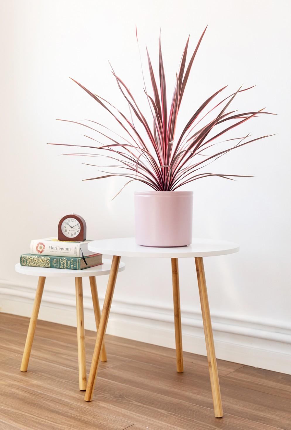 piante-eleganti-appartamento-7 Cordyline australis Colvin-living-corriere