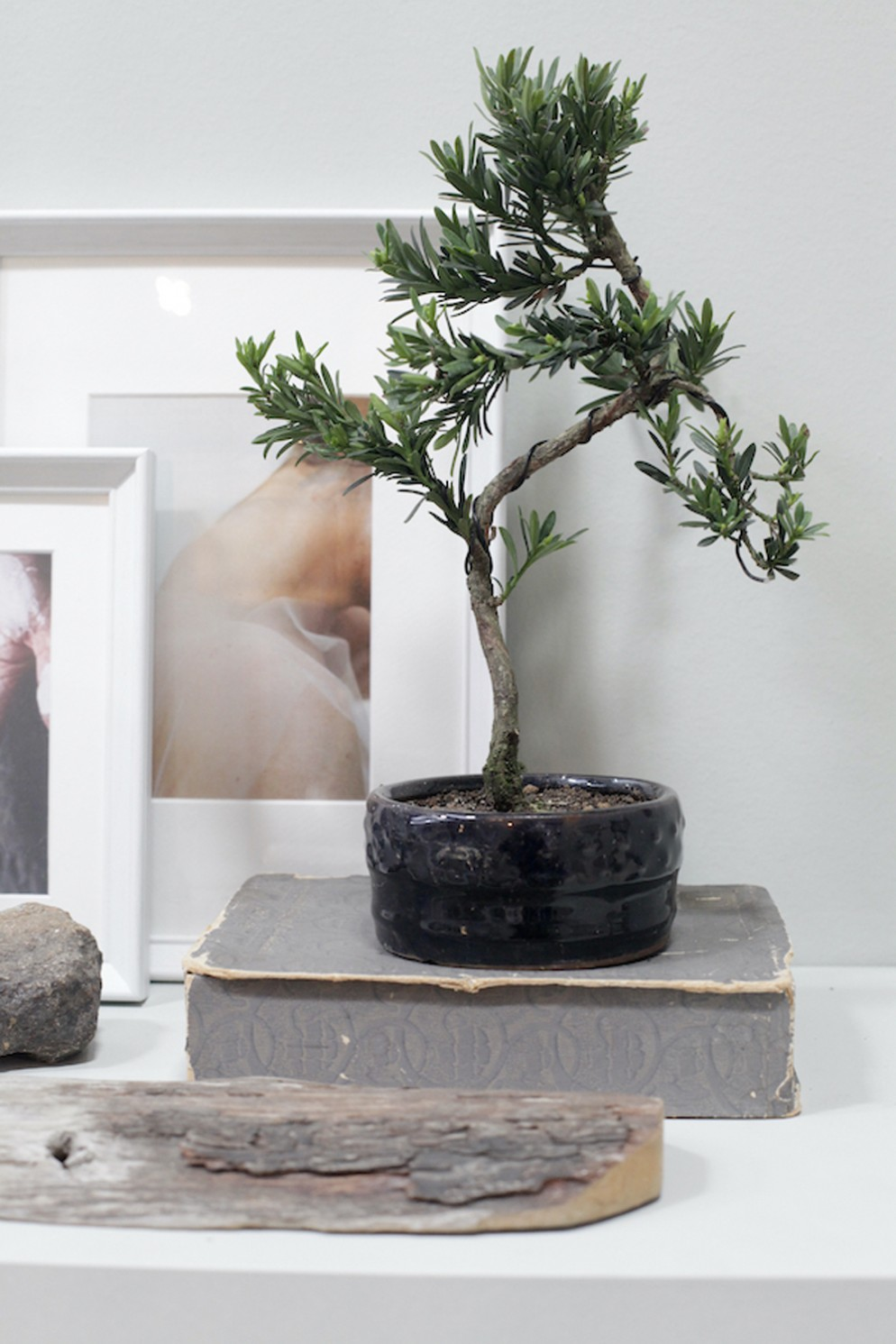 piante-eleganti-appartamento-8. Bonsai @aboutgarden-living-corriere