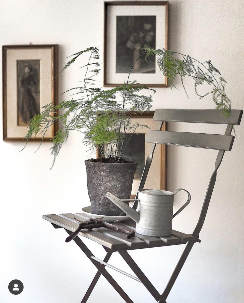 piante-eleganti-appartamento-9. Felce asparagina @aboutgarden-living-corriere
