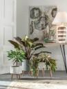 piante soggiorno moderno (14)