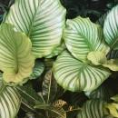 piante soggiorno moderno (15)
