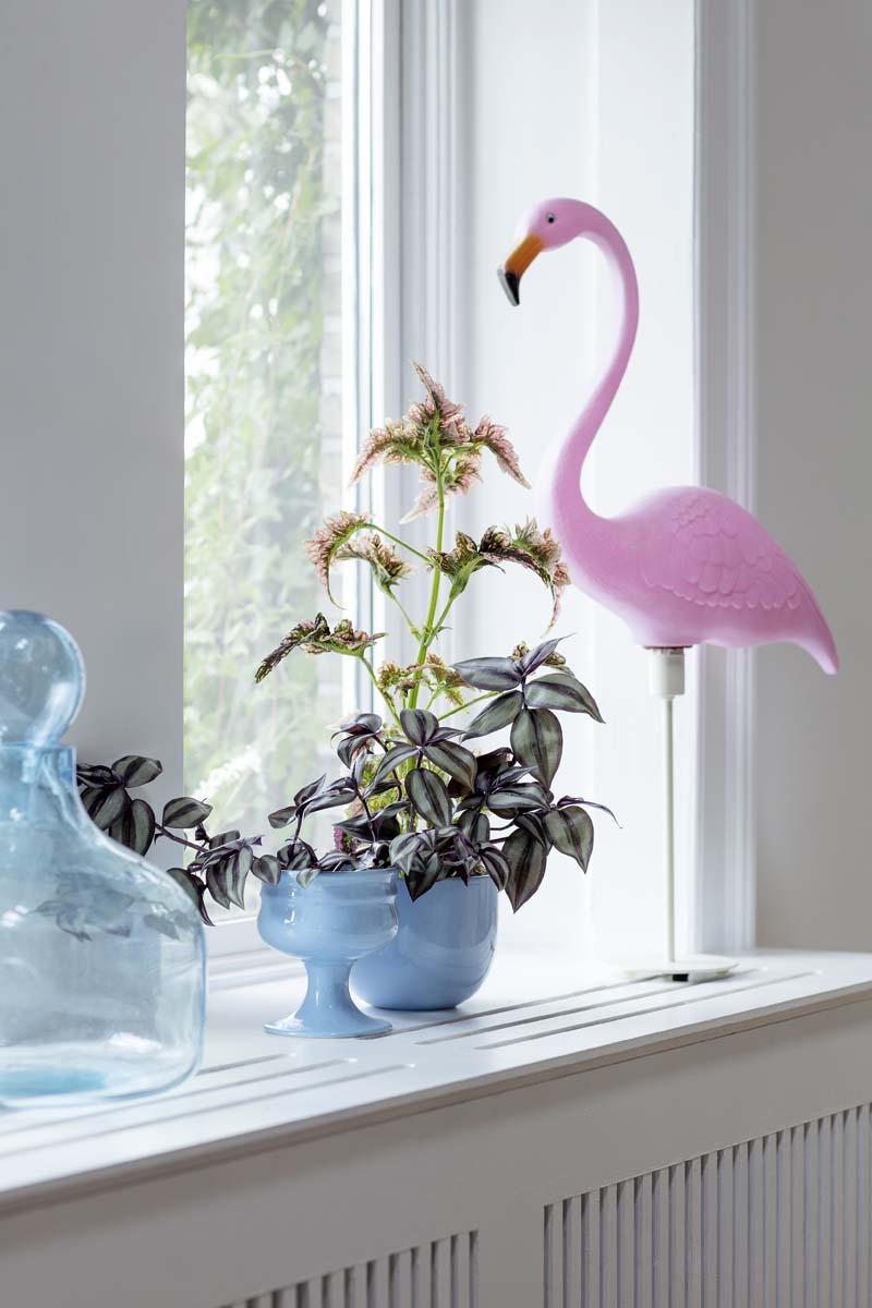 piante soggiorno moderno (4)