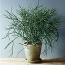 piante soggiorno moderno (7)
