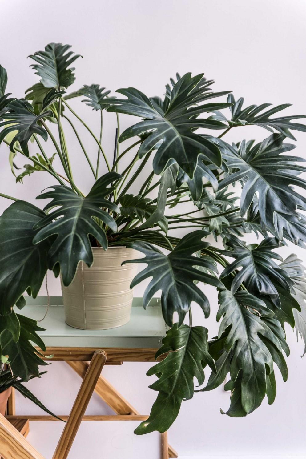 piante soggiorno moderno (8)