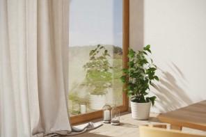 Piante da appartamento: il Ficus Benjamin in 5 consigli degli esperti