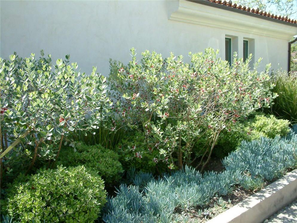 alberi-da-giardino-sempreverdi-1. euro plants vivailiving-corriere