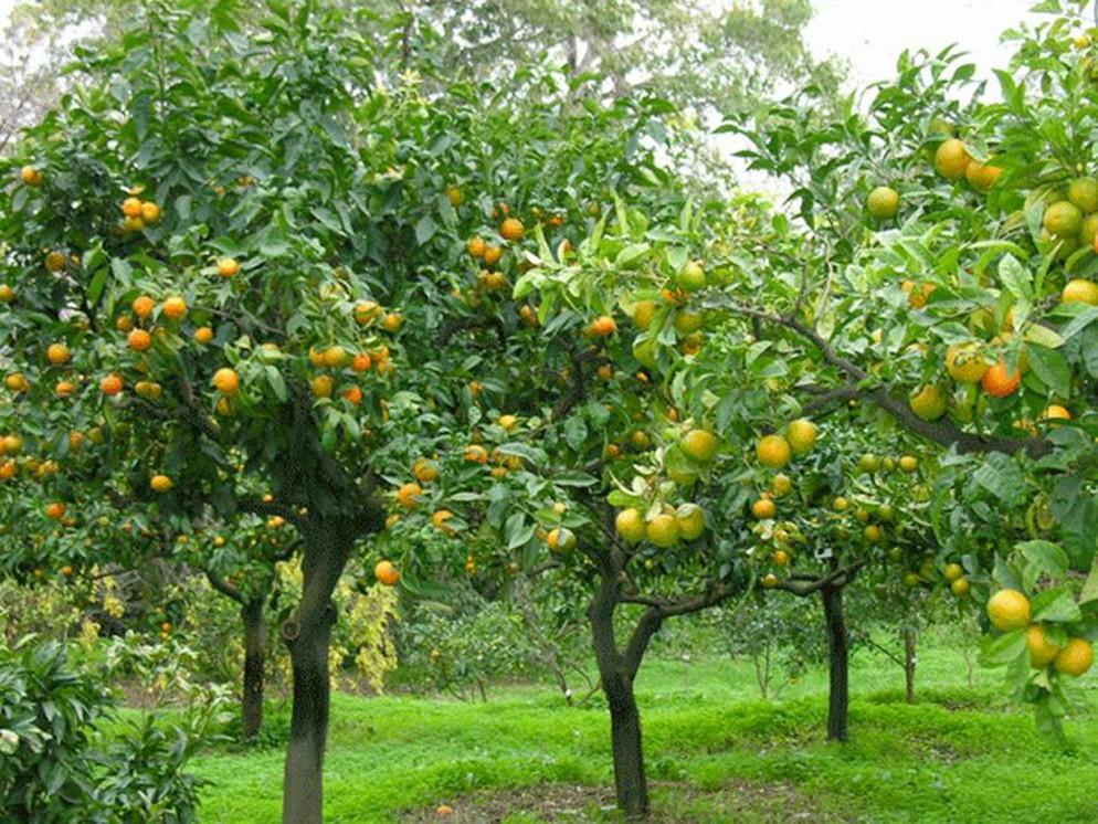 alberi-da-giardino-sempreverdi-10 ortosemplice.itliving-corriere