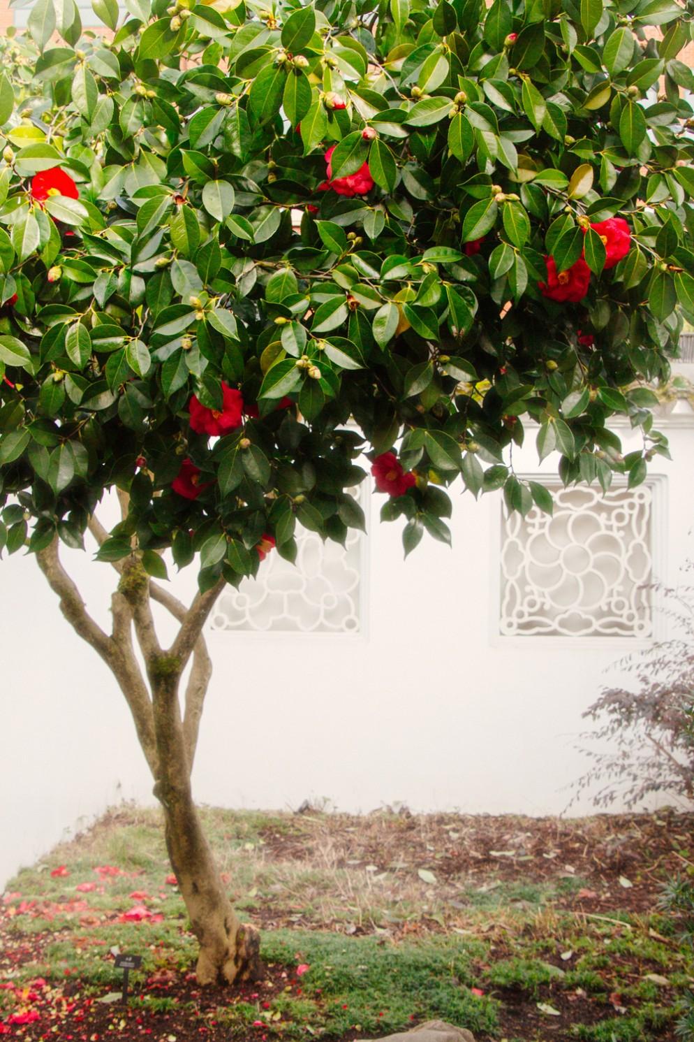 alberi-da-giardino-sempreverdi-4. eric-muhr-gY_klDgAej8-unsplashliving-corriere