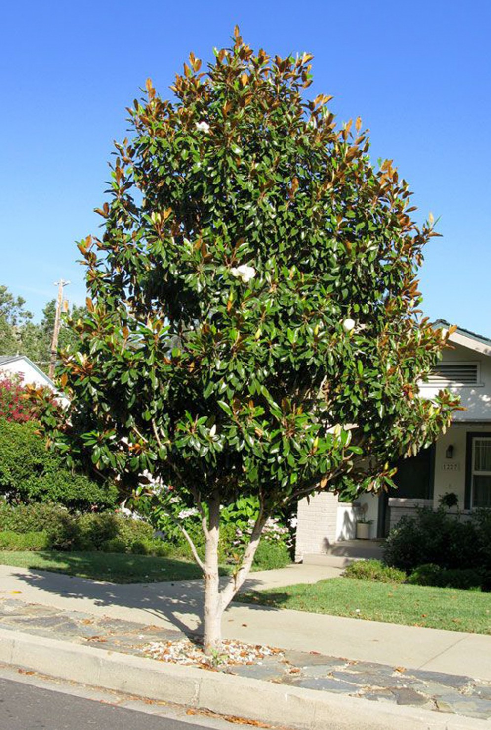 alberi-da-giardino-sempreverdi-5. via pinterestliving-corriere