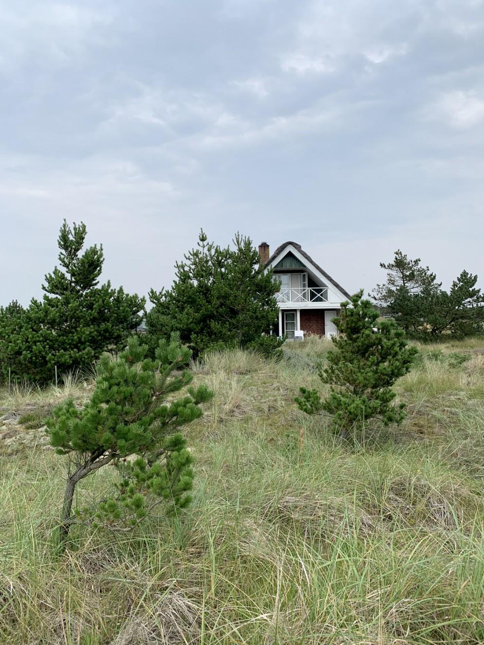 alberi-da-giardino-sempreverdi-9 conifere naneliving-corriere