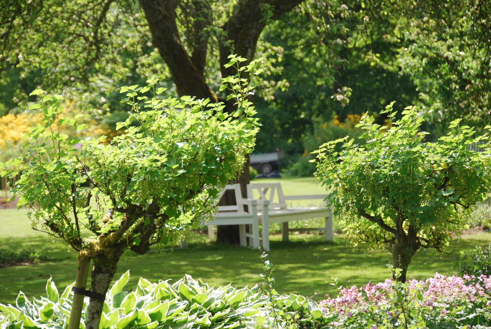 alberi-da-giardino-sempreverdi-sonia-santella-01living-corriere