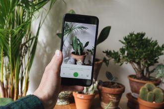 app-cura-piante-2021-still-livingcorriere