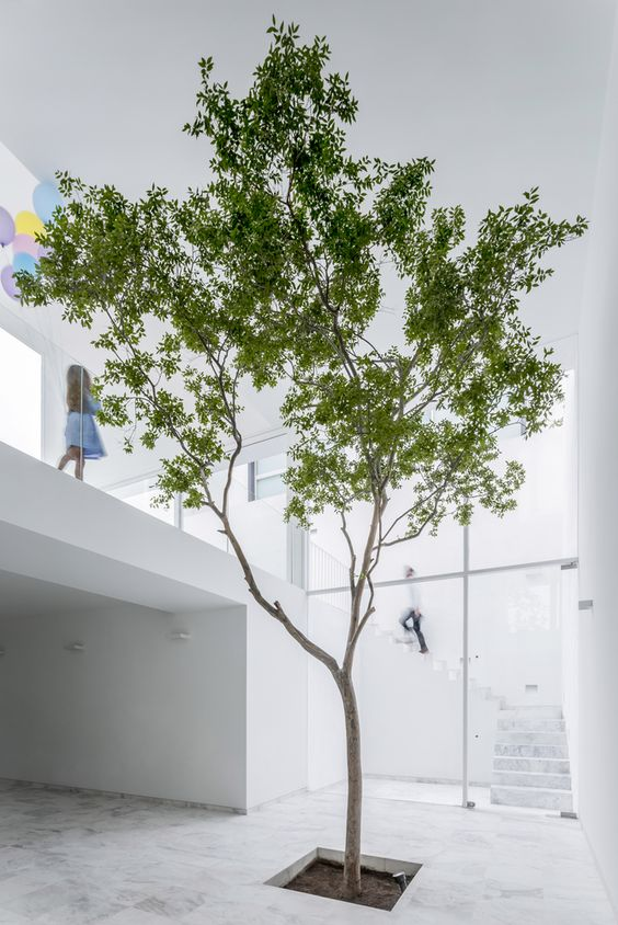 ficus-benjamin-2. archdaily.com-living-corriere
