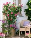 Foto balconygardenweb.com