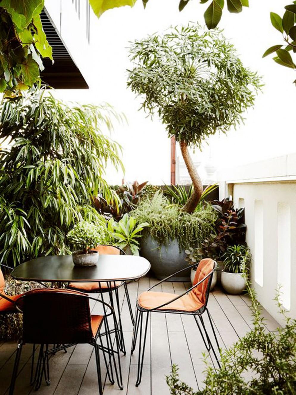 piante-da-balcone-resistenti-11. thedesignfiles.net-livingcorriere