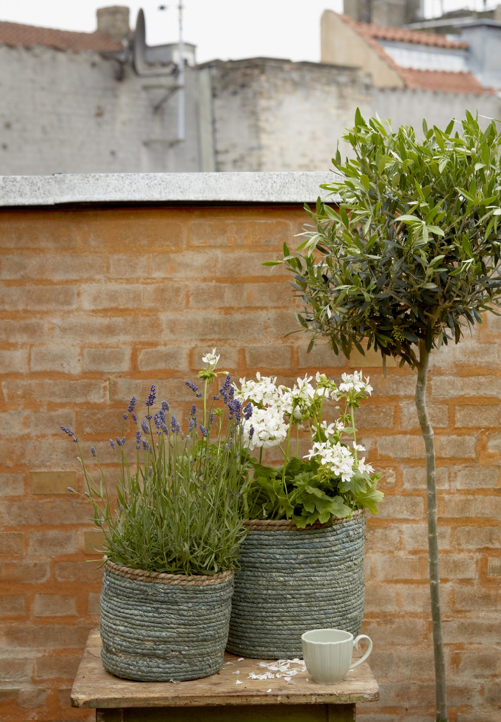 piante-da-balcone-resistenti-2. Geraniums_4000_Urban Summer Escapes_17-livingcorriere