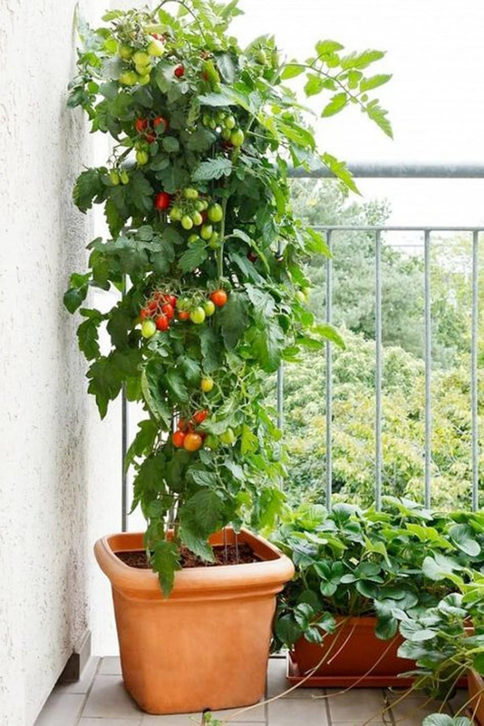 piante-da-balcone-resistenti-8. etsy.com-livingcorriere