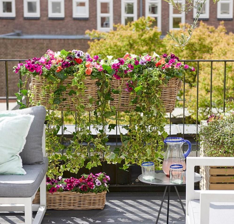 piante-da-balcone-resistenti-9. Petunia-livingcorriere