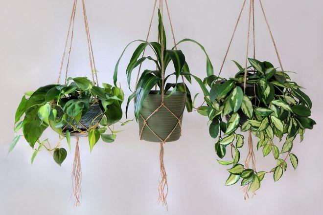 piante-ricadenti-da-interno-1. ppmapartments.com-living-corriere