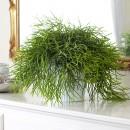 piante-ricadenti-da-interno-11. Rhipsalis - hero Plants Happen  plantshappen.com.au -living-corriere