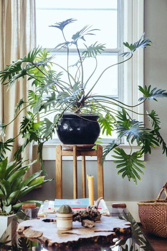 piante-ricadenti-da-interno-13 theshinysquirrel.tumblr.com-living-corriere