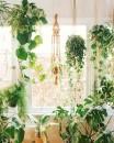 piante-ricadenti-da-interno-14 oldbrandnew.com-living-corriere