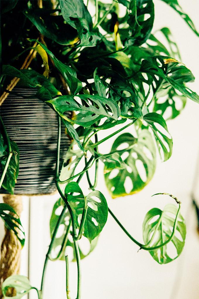 piante-ricadenti-da-interno-4 hanging-plant-2-living-corriere