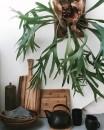 piante-ricadenti-da-interno-5. sassytownhouseliving.com-living-corriere