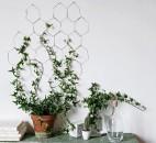 piante-ricadenti-da-interno-6. cocondecoration.com 1-living-corriere