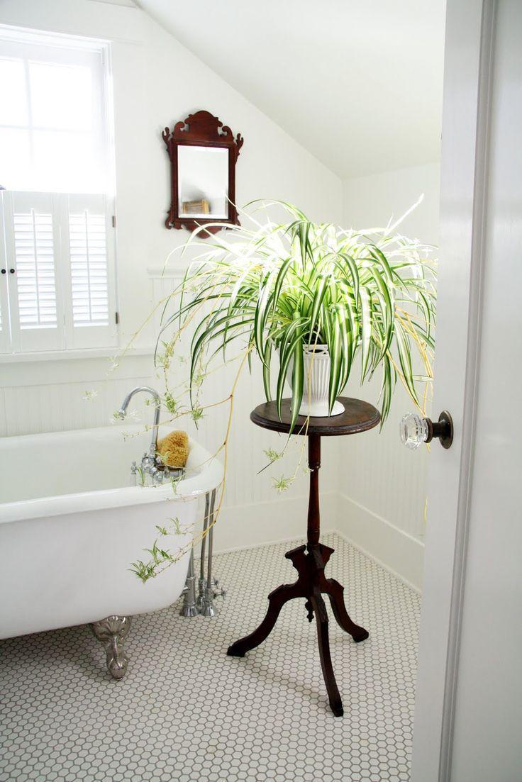 piante-ricadenti-da-interno-7. cocondecoration.com-living-corriere