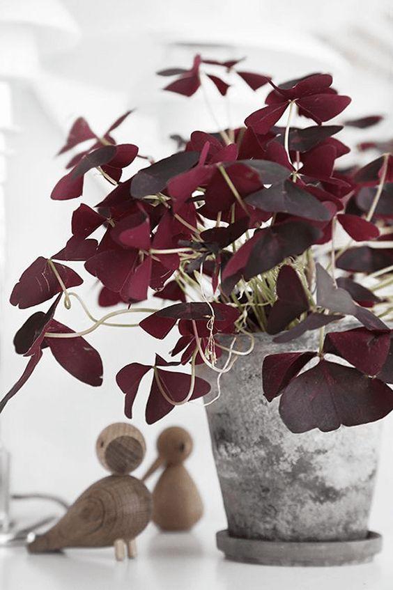 piante-ricadenti-da-interno-8 conceptandcolorways.com-living-corriere