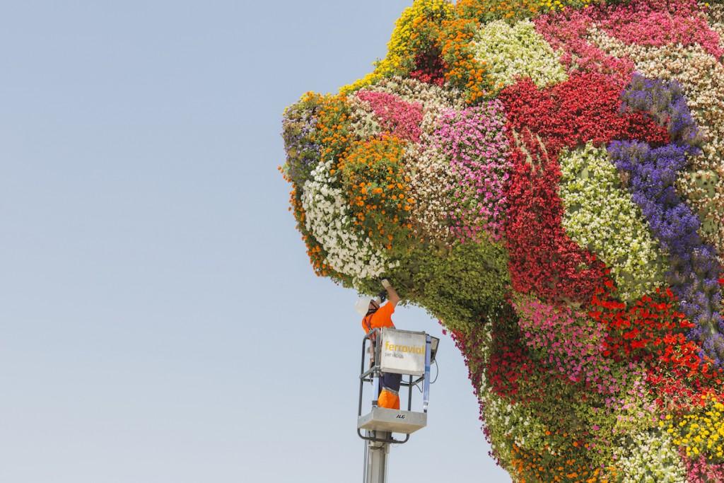 Puppy, il cane gigante di fiori di Jeff Koons che accoglie i visitatori fuori dal museo