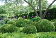 piante-sempreverdi-da-giardino-1. Bosso e Allium living-corriere