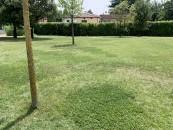 piante-sempreverdi-da-giardino-13. pratoliving-corriere