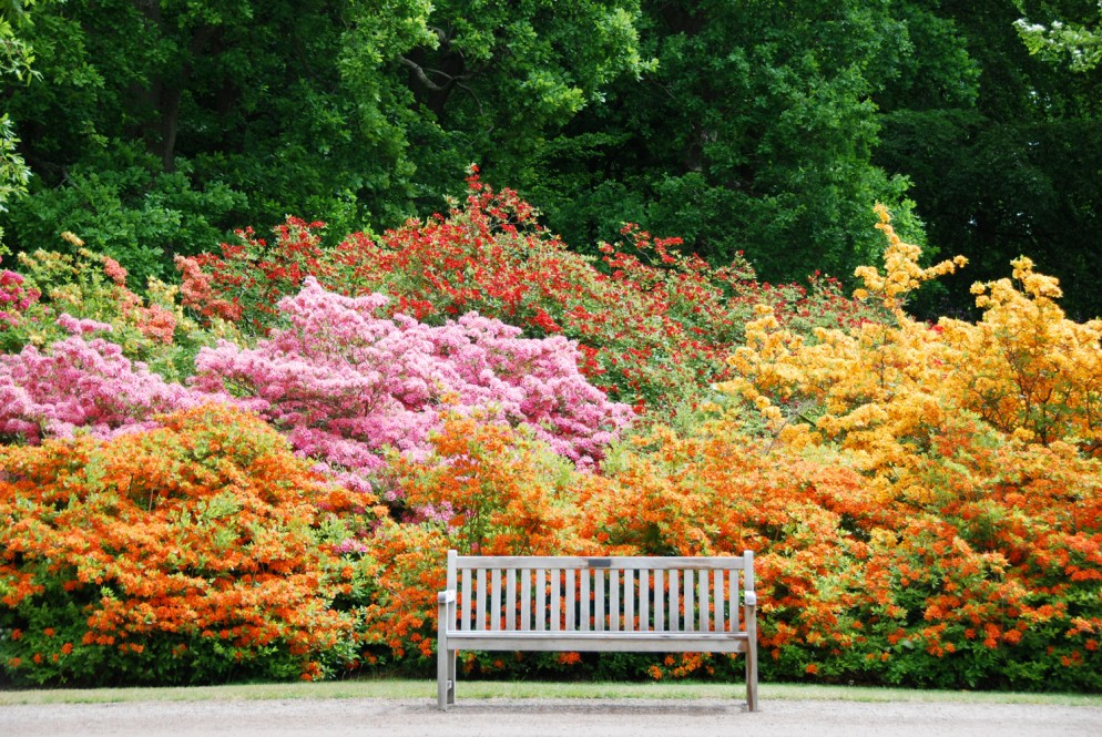 piante-sempreverdi-da-giardino-3. Azalealiving-corriere