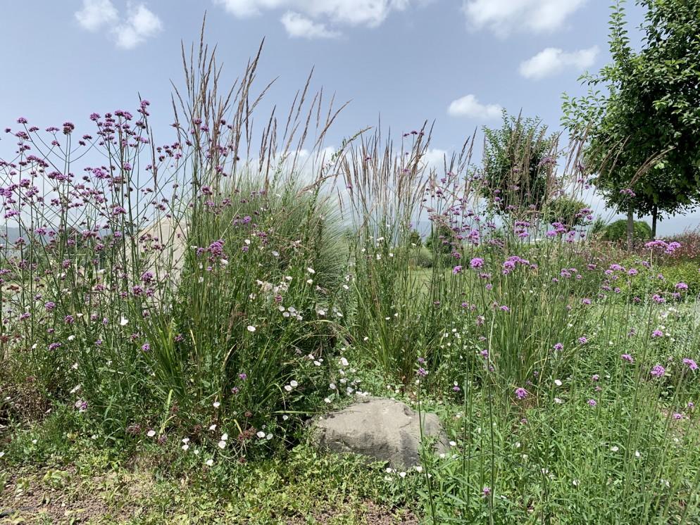 piante-sempreverdi-da-giardino-5. Gaura erbacea perenneliving-corriere